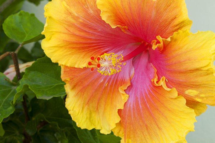 Orange Blog Photo