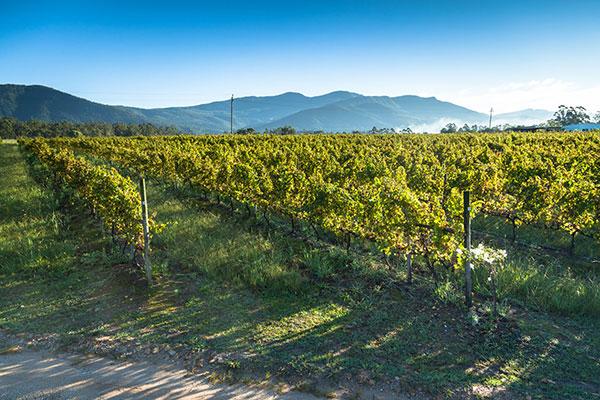 Explore-Plett-Winelands