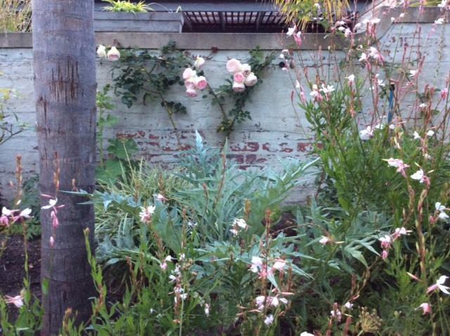 Climbing roses at Cornerway House
