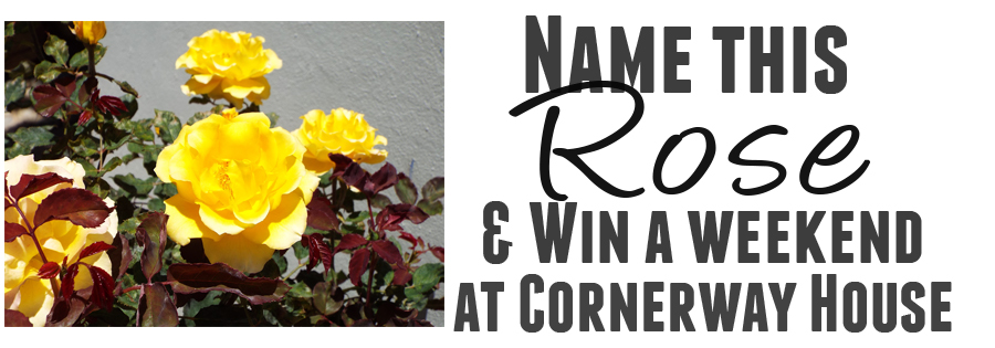Name-This-Rose