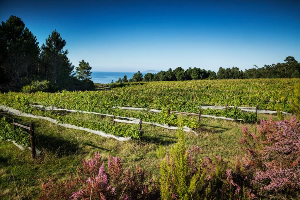 Saafin-Plett-Wine