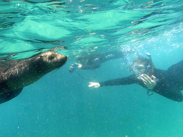 Seals Plett