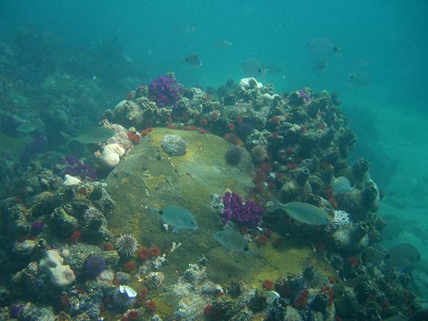 Photo: Pro Dive Plett