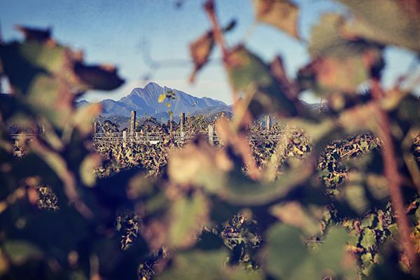 Autumn-Plett-Winelands