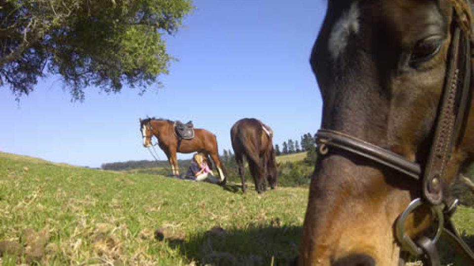 Plett-Horse-Riding-2