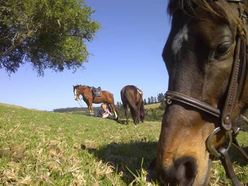 Plett-Horse-Riding