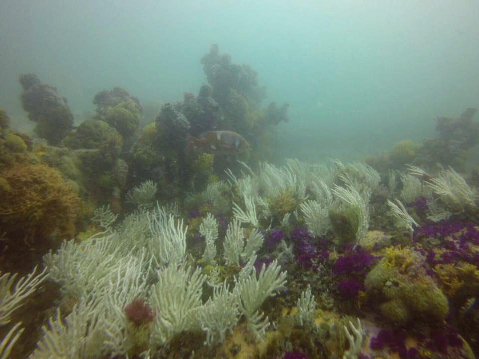 scuba diving Plett