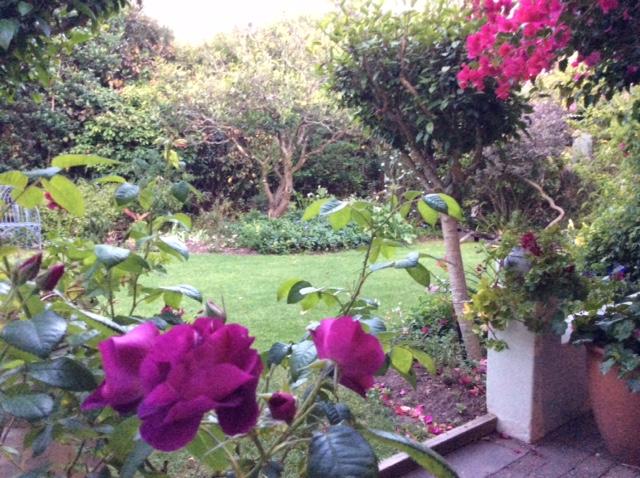 Peace in our garden